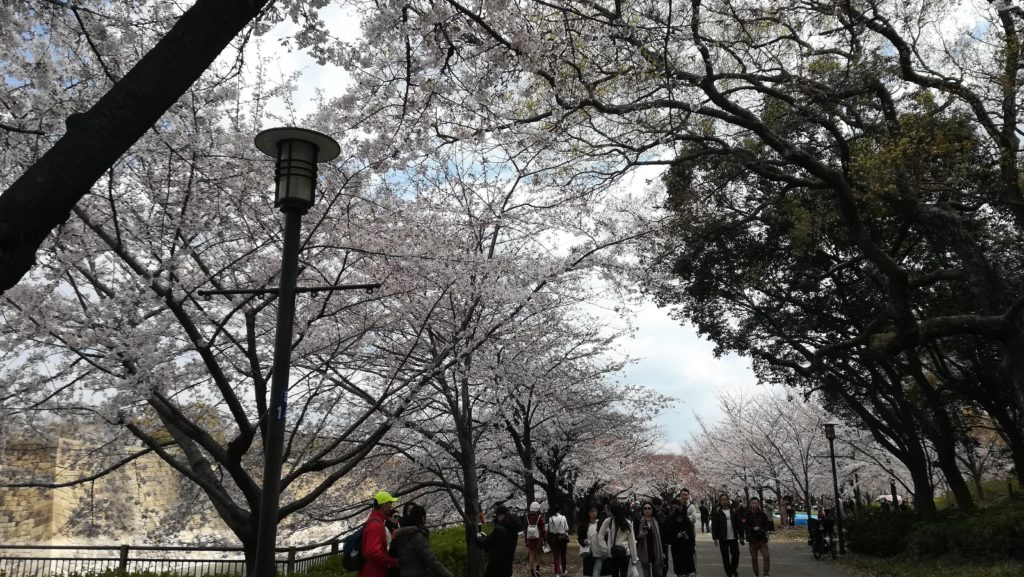 お花見イベントで大阪城公園に行ってきました